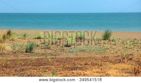 Landscape Maquis Shrubland Called Macchia Mediterranea In Italian Language In Summer