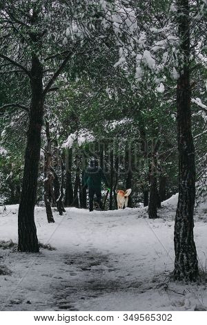 Man With His Labrador Dog Walking Through A Snowy Forest. Lifestyle And Winter Concept