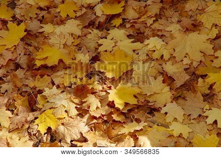 Background Of Autumn Leaves. Layer Of Yellow Leaves On The Ground. Surface Texture Of Orange Leaves.