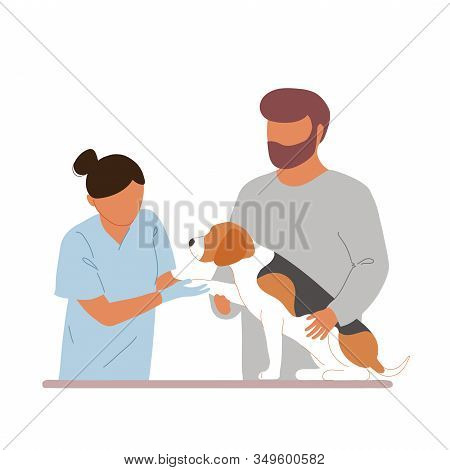 Female Veterinary Examining Beagle. Owner Assisting The Vet In Examination Of His Dog, Holding Him A