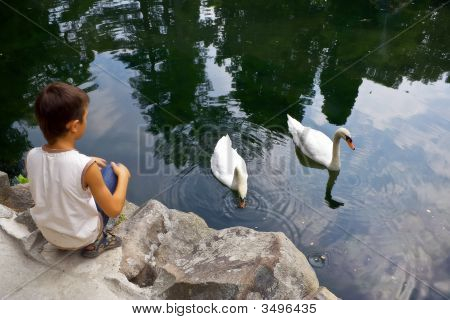 Two Swan And The Boy
