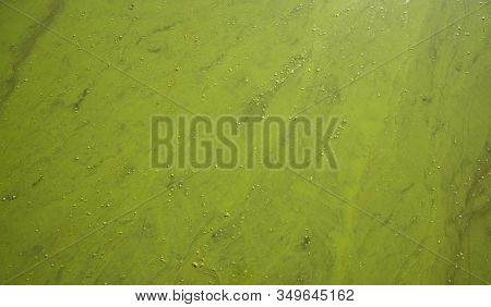 Blossom Chemical Pollution River Soft Focus Textured Background Water Green Surface Copy Space For Y