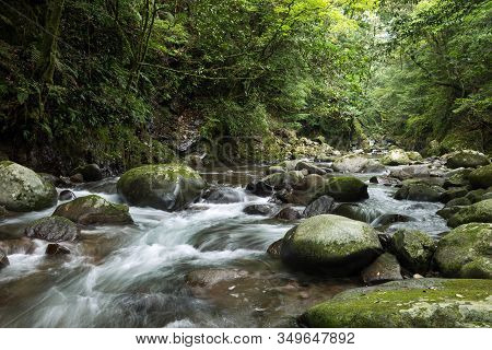 Shallow Brook Flowing Among Lot Of Rounded Stones Under Green Primeval Forest