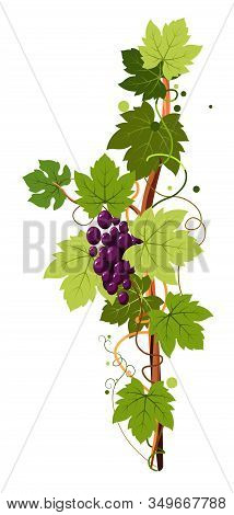 Vine Vertical Twig Isolated Icon, Grape Bunch