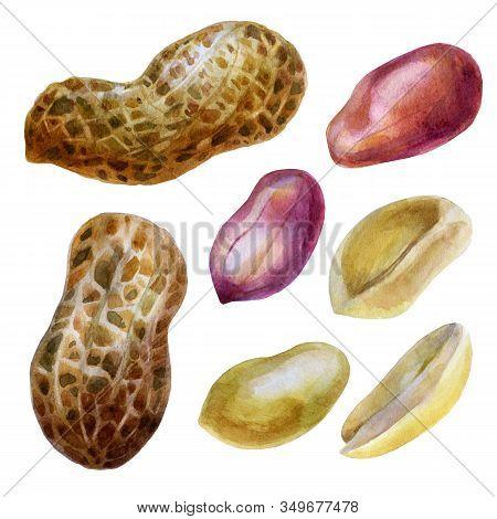 Watercolor Illustration. Peanut. Inshell Peanuts, Peeled Peanuts, Peanut Grains In The Husk.