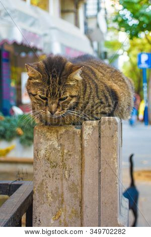 Kadikoy Street Cat 1