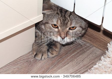 The Lop-eared Cat Hid Behind The Furniture