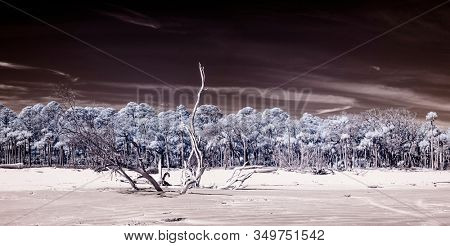 False color infrared photograph of beach and forest, surreal landscape.