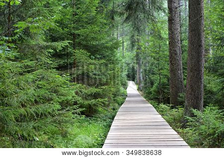 Wooden Footbridge Over Peat Bog And Swamp Tourist Path