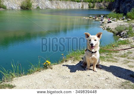 Small Puppy Sitting Near Lake Beauty Little Dog