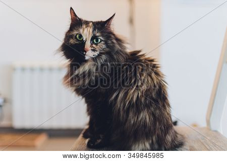 Kitten, Resting Cat On A Flor In Colorful Blur Background, Cute Funny Cat Close Up, Young Playful Ca