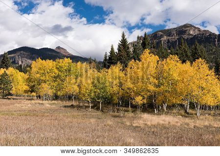 Autumn Color Abounds In Cimarrona Campground, Colorado. Cimarrona Campground Is North Of Pagosa Spri