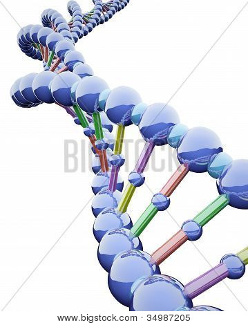 Metallic Dna Chains