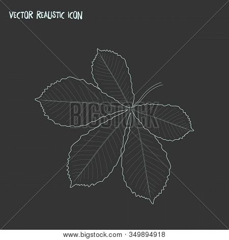 Chestnut Leaf Icon Line Element. Vector Illustration Of Chestnut Leaf Icon Line Isolated On Clean Ba