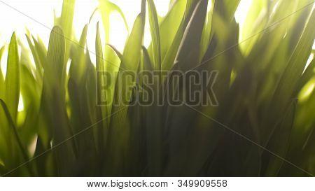 Nature Awakening From Hibernation, First Warm Sunlight, Spring Grass Fertility