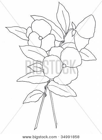 Freehand Line Drawing of Pansy Flowers