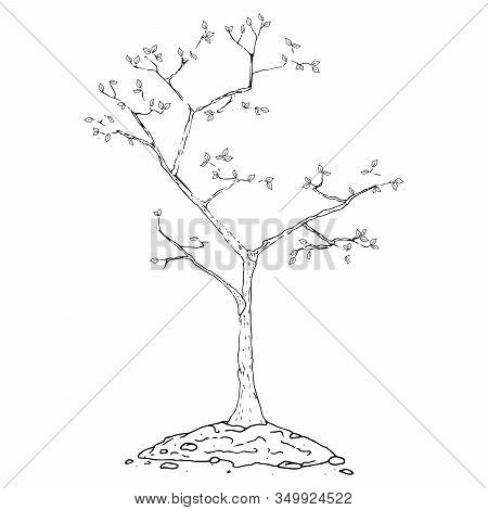 Planting A Tree In The Ground Icon. Vector Illustration Of An Autumn Bush, Tree Planting. Hand Drawn