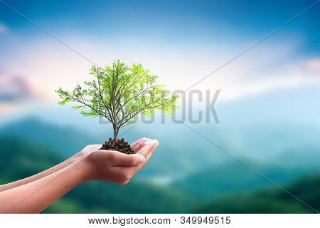 International Day Of Forests Concept: Hand Holdig Big Tree Growing On Natural Background