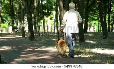 Visually Impaired Man Walking With Guide Dog In Park, Feels Safe Holding Harness