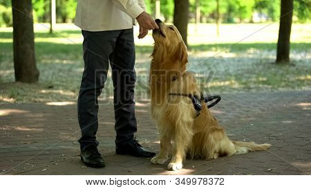 Dog Handler Feeding Retriever, Training Pet In Park, Giving Obedience Commands