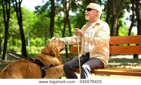 Visually Impaired Elderly Male Sitting On Bench, Stroking Beloved Guide Dog