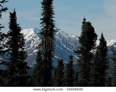 Sitka Silhouettes - Alaska