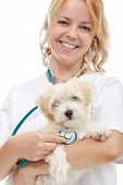 Small fluffy dog at the veterinary doctor - isolated, closeup poster