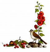 A color pencil freehand drawing of a bird, some hollyhocks, rocks, berries and chestnuts, arranged into a half border format. poster