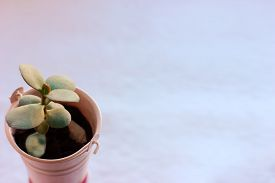 Mini Succulent Plant For Office. Spring Gardening Concept. Office Green Plants. Succulent In Pink Po