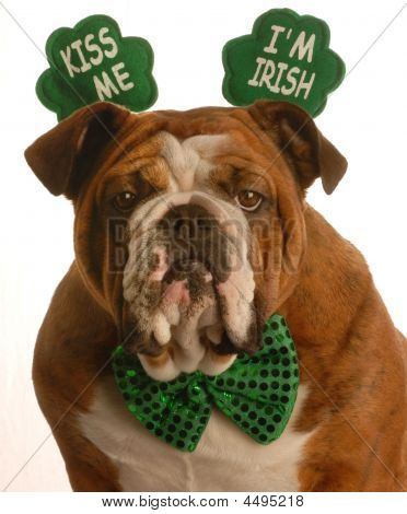 Bulldog Kiss Me I'm Irish