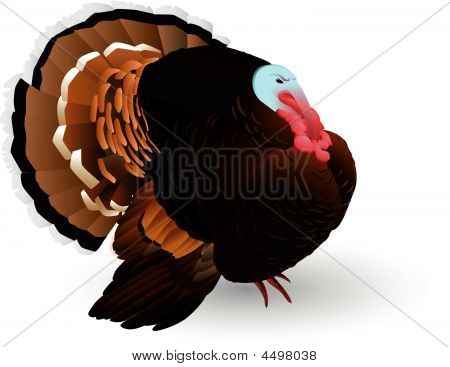 Vector turkey-cock on a white background for Thanksgiving Holiday poster