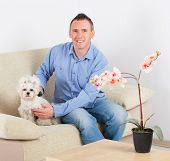 Owner of the maltese dog brushing him on the sofa in home poster