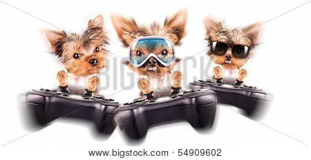 charming Puppy play on game pad on the white background poster