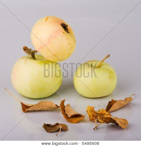 Three Small Apples And Dried Up Leaves