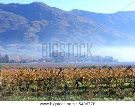 Misty Valley Estate