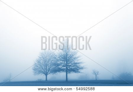 Misty morning in the winter time