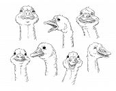 A cute goose with different facial expressions of a human. Vector illustration. poster