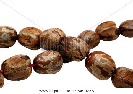 Beads Of Rubber Tree Seeds