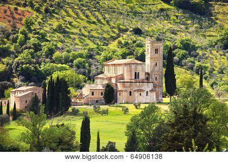 Sant Antimo Montalcino Church And Olive Tree. Orcia, Tuscany, Italy