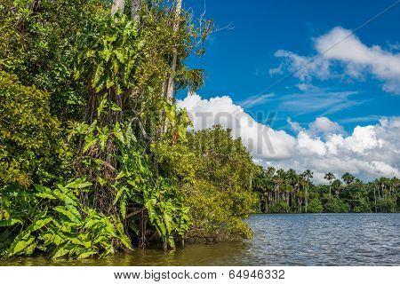 river in the peruvian Amazon jungle at Madre de Dios Peru poster