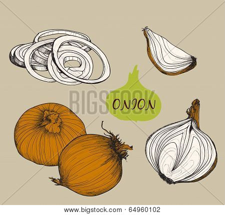 Onion. Set f illustrations