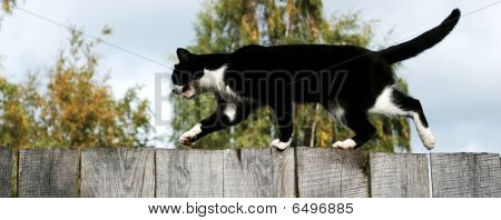 Mewing Cat On A Fence
