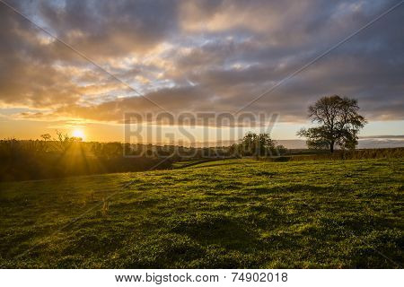 Sunset in farm fields with tree and beautiful cloudy sky, Cornwall, UK