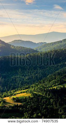 Fir Forest On A  Hill At Sunrise