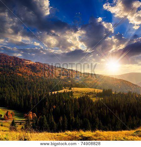 Fir Forest On A  Hill At Sunset At Sunset