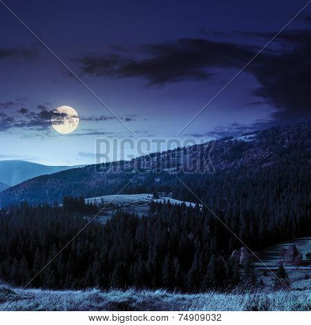Fir Forest On A  Hill At Night