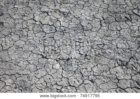 Dried Cracked Earth