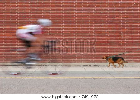 Cyclist And Dog