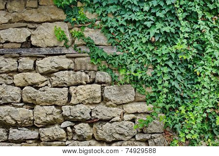 Old Stone Wall With Plants
