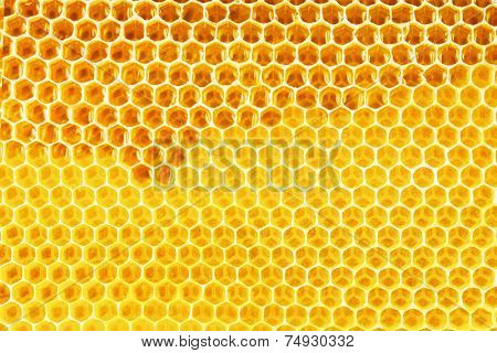 natural bee honey in honeycomb background